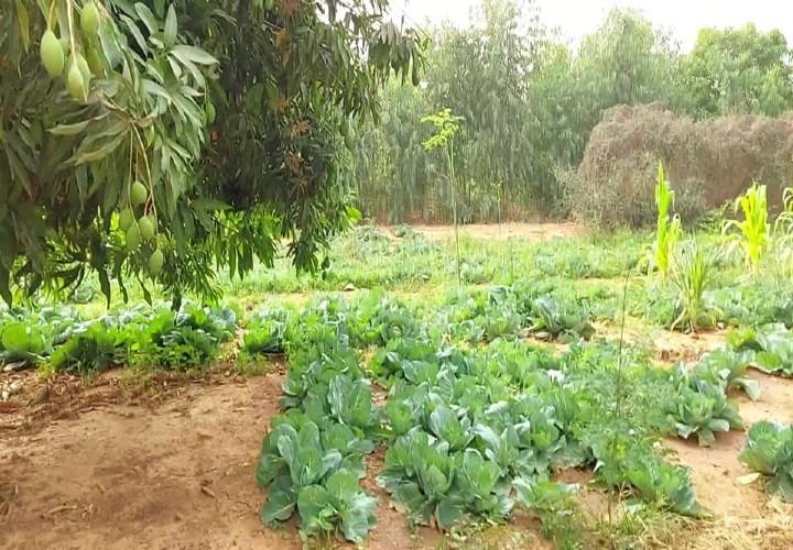Jardin 2 Hectares avec Titre Foncier