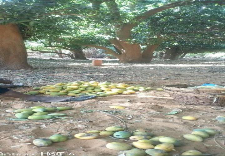 Jardin de 3500m2 Route Tillabéri