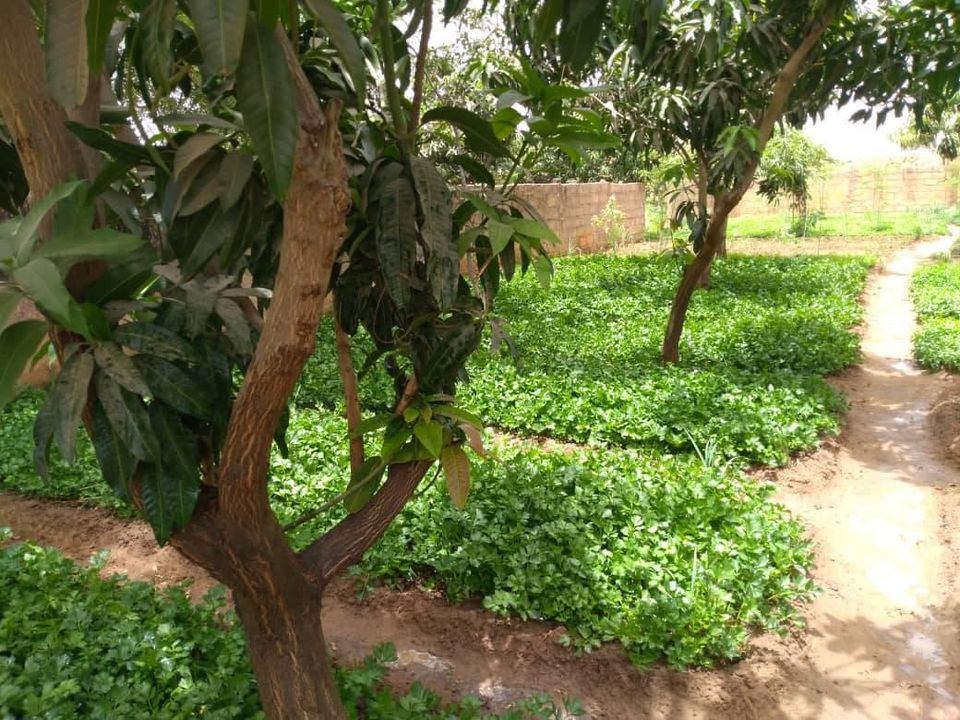 Jardin 1 Hectare et Demi – Lossogoungou