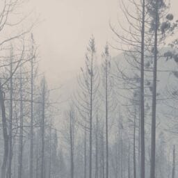 Feeling Sick From Wildfire Smoke? Here's How To Decrease Your Risk