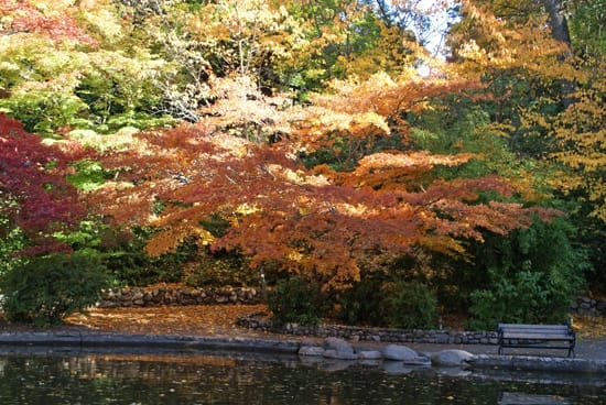 Lower Duck Pond in Lithia Park