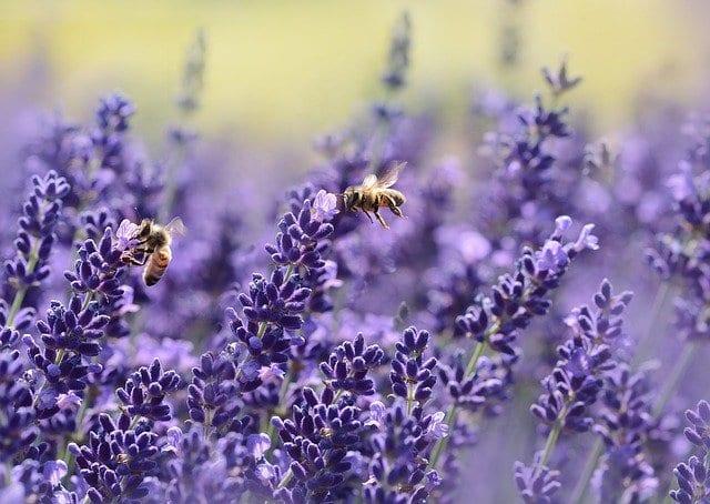 Planting Pollinator Gardens
