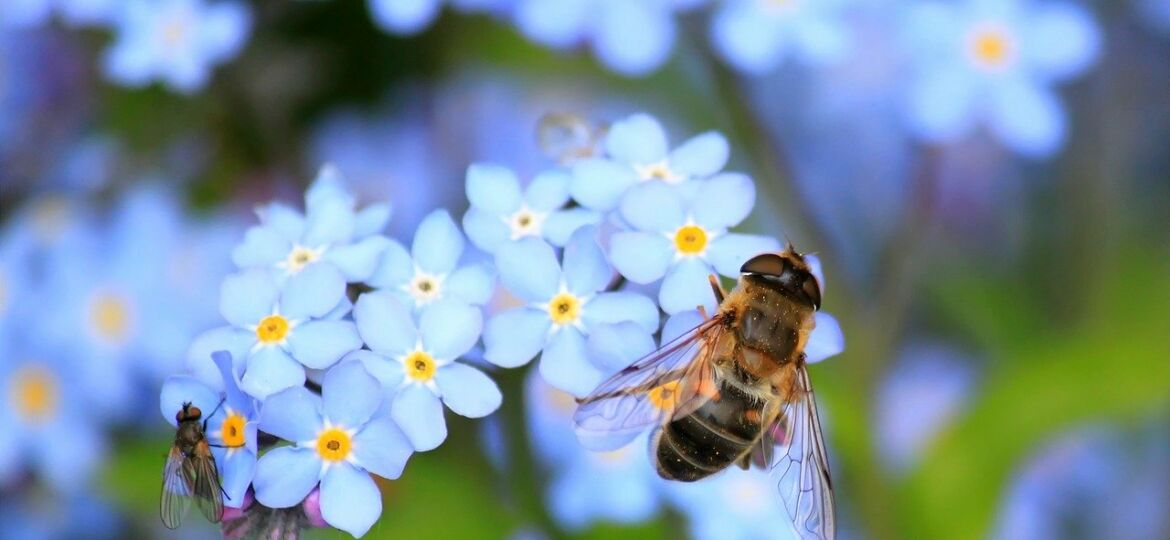 Why Are Pollinator Gardens Important?