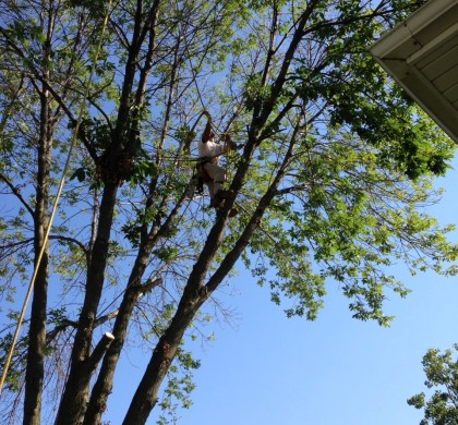 How Pruning Trees Can Prove to be Beneficial in the Long Run?