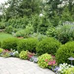 shrub-pruning