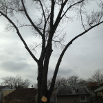 tree prunning and maintenance by certified arborist