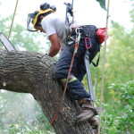 tree trimming and removal by certified arborist