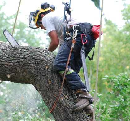 What are Some of the Reasons Task of Tree Removal Should be Left for Experts to Handle?