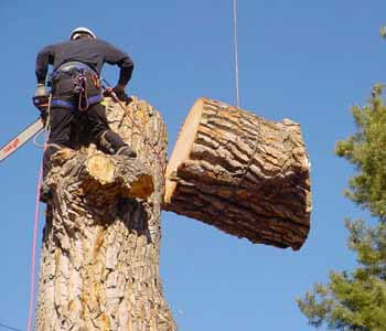 4 Important Tree Services Provided by Professional Firms