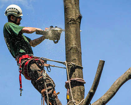 An Insight into Situations Where Tree Removal Becomes Necessary and Why You Should Hire a Professional Arborists for Tree Removal
