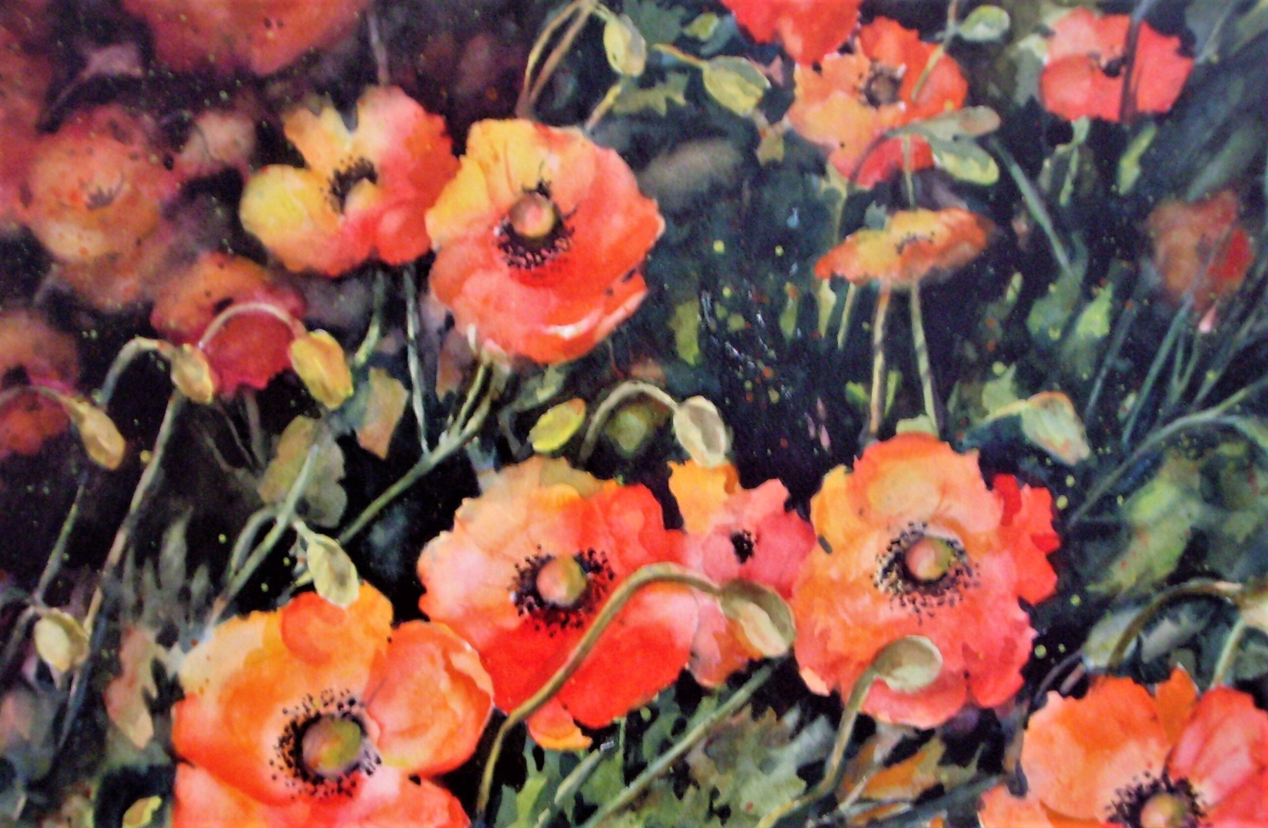 rmc-poppies aglow-painting