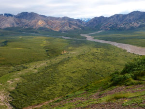 The Bus Ride in to Denali National Park