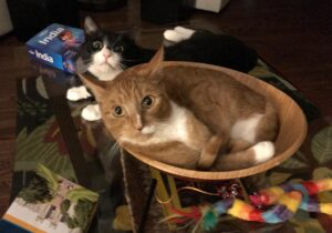 """Here I am with my baby """"brother"""", Buddy. If I've told him once, I've told him a thousand times: the salad bowl is mine."""