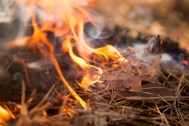 Pilgrim Creek Ablaze