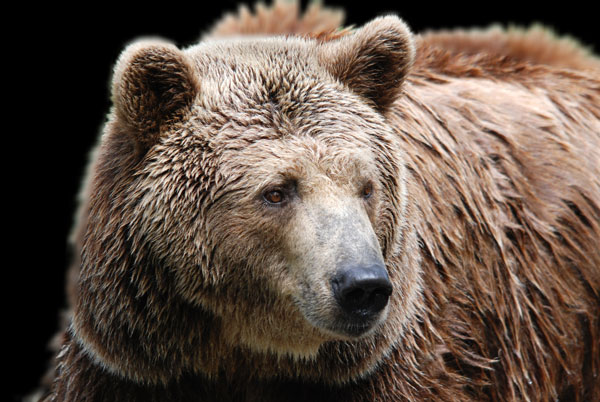 Two Grizzlies Killed