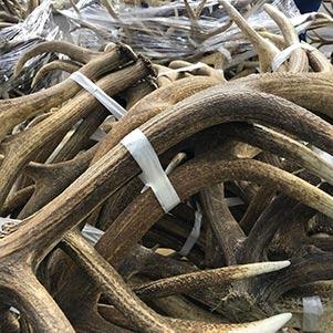 Elk Antler Sales Tallied