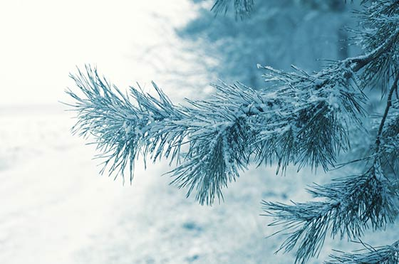 Cold Front to Bring Snow and Cold