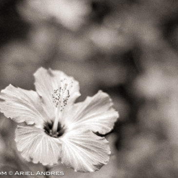 Another 365 Project – Day 217