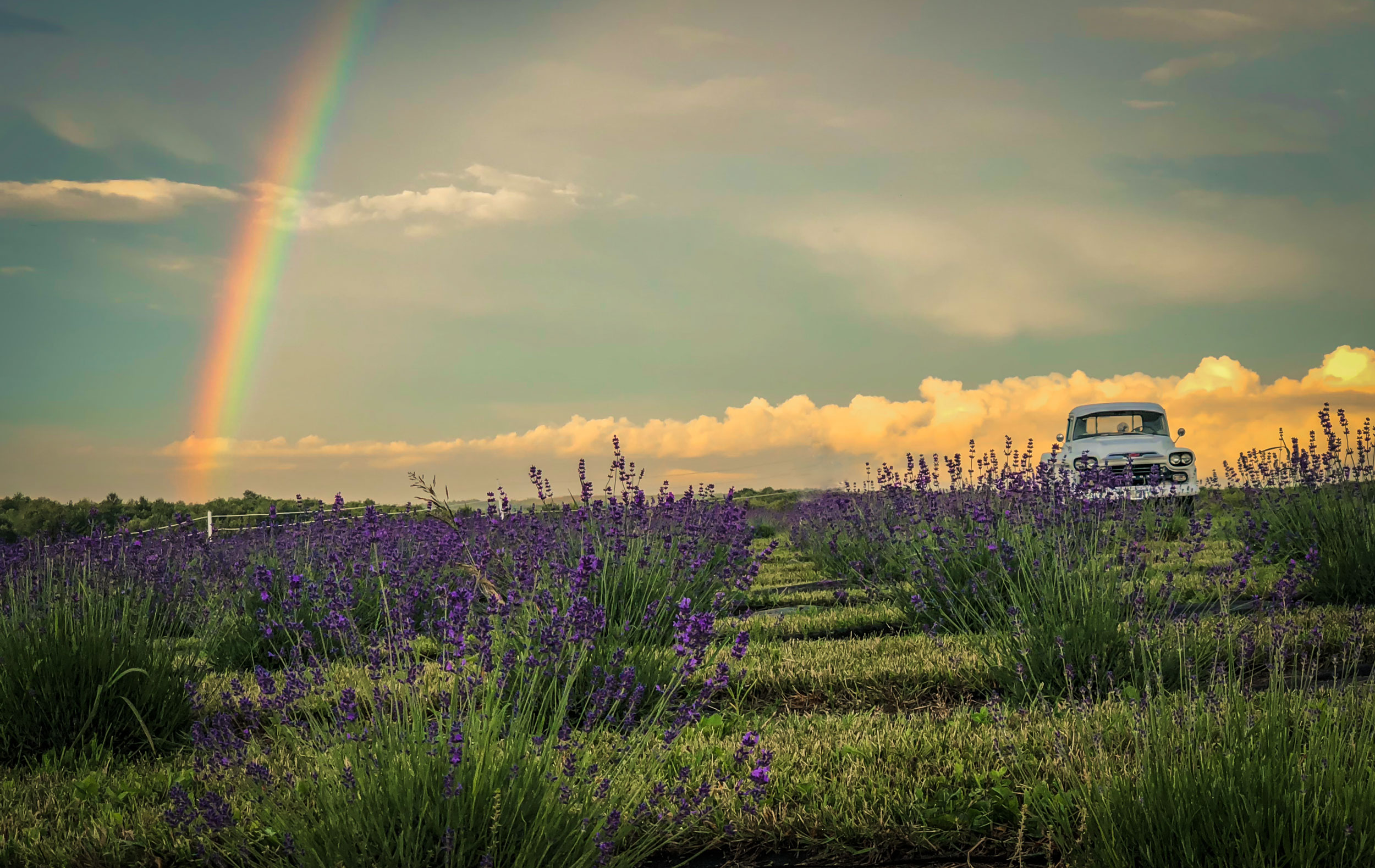 First Responders & Health Care Workers Lavender Farm Experience