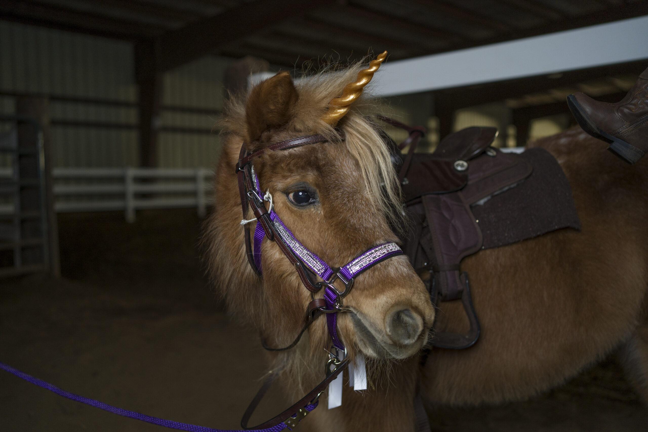 Unicorn & Lavender Farm Experience