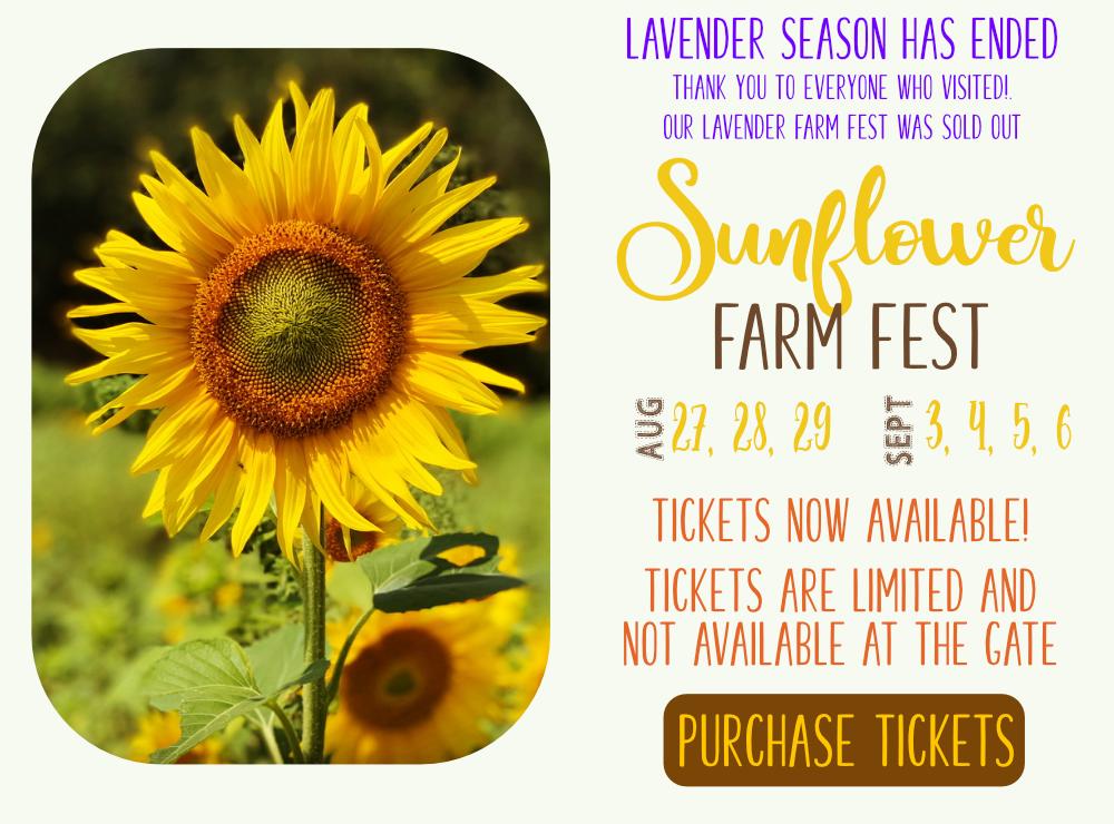 Sunflower Farm Fest