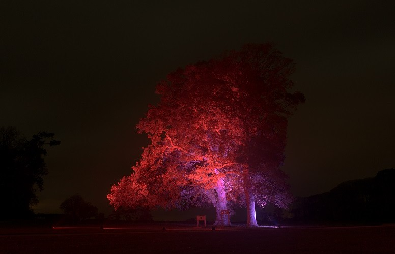 Dramatic Tree Uplighting