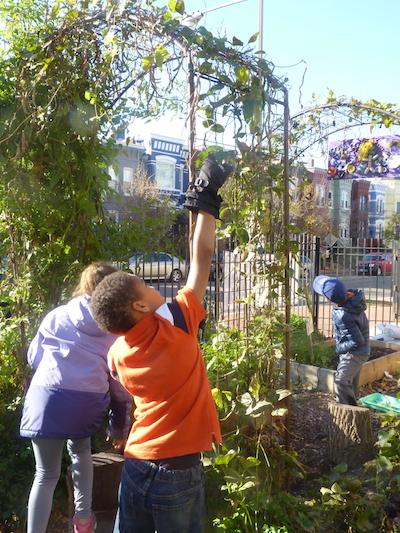 SWS FoodPrints garden