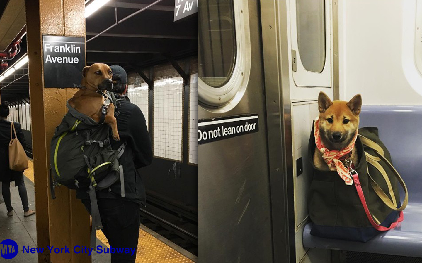 NYC Subway Bans Dogs Unless They Fit Into a Bag & New Yorkers' Solution is Hilariously Clever