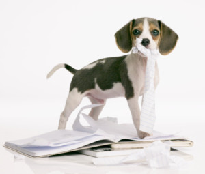 beagle_puppy_homework