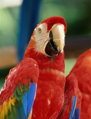about-us-parrot-birds