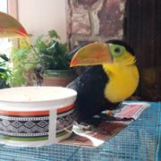 toucan baby 3