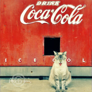 Ice Cold Cat © Kathryn Van Aernum