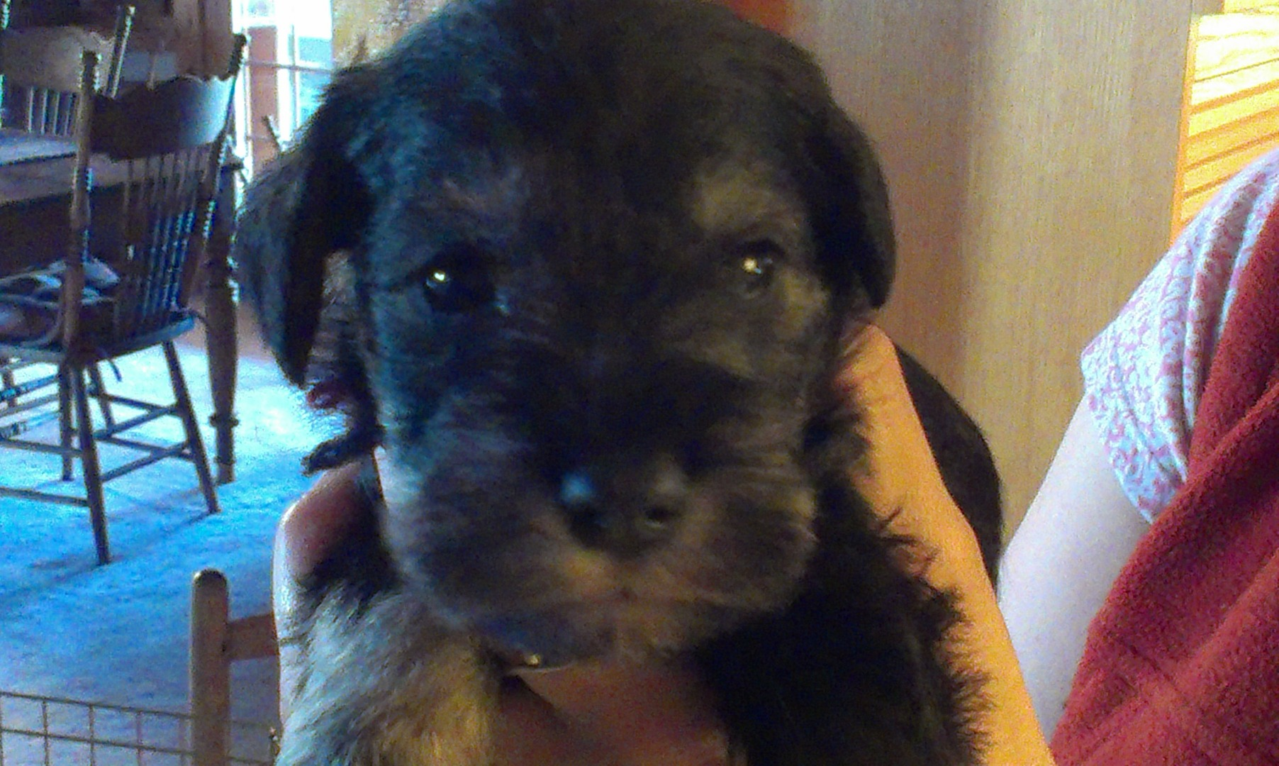 Lexi's baby Bella