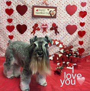 Happy Valentine's from Yoshi!