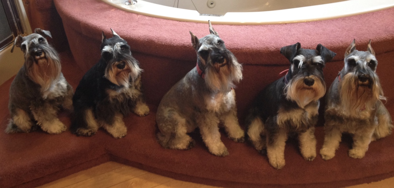 Wonderful Dogs!