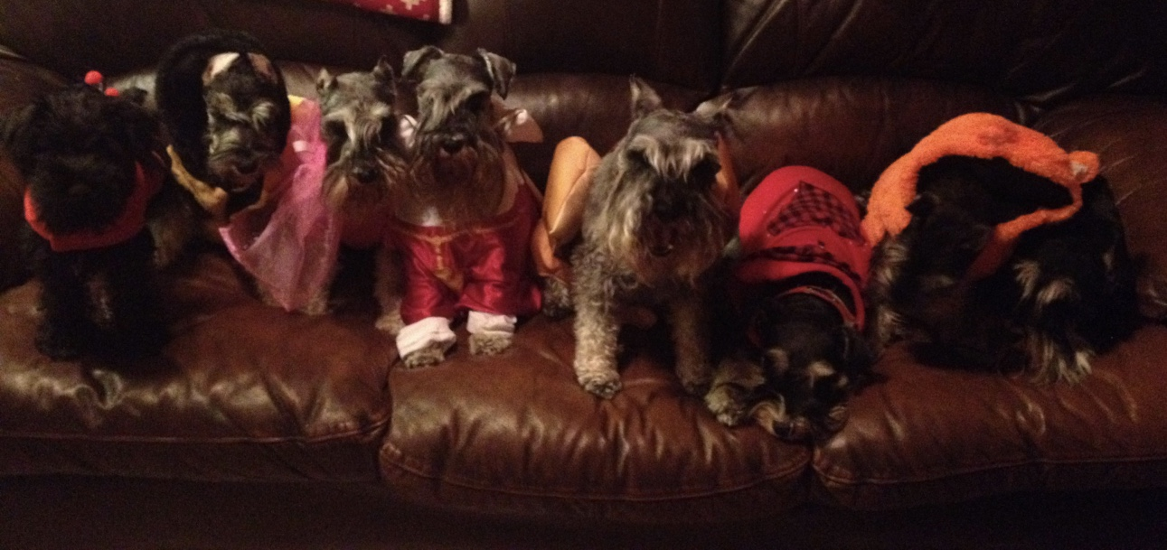 Happy Halloween from some Wonderful Dogs!