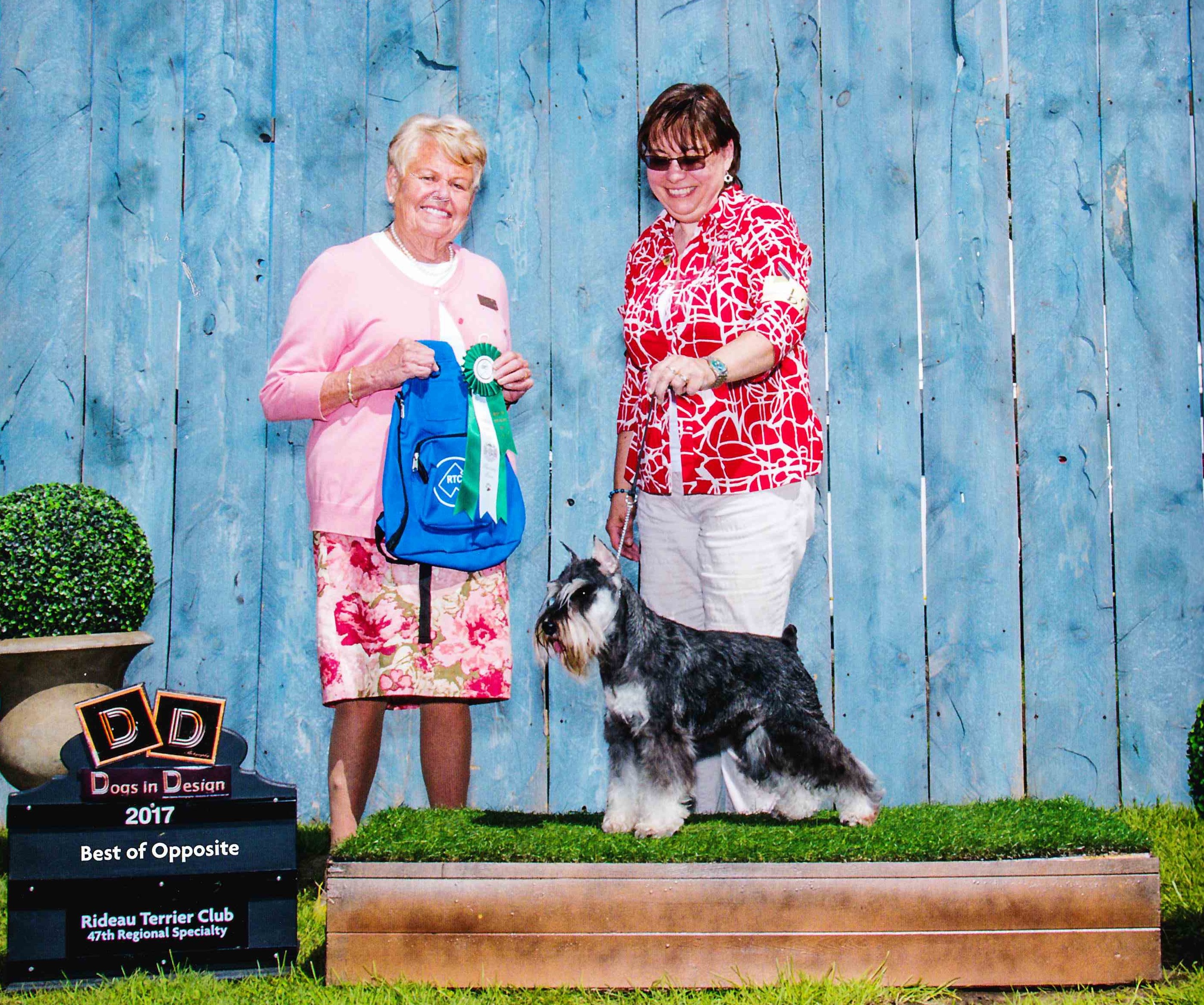 Our King wins Best of Opposite at Rideau Terrier Specialty!