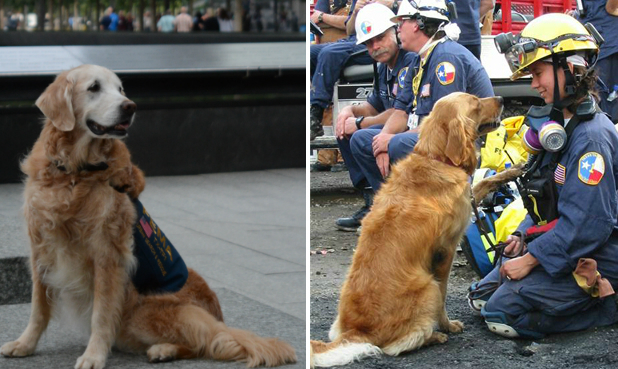The Last Living Rescue Dog Who Worked At Ground Zero And Her Handler Were Honored In The Sweetest Way Possible