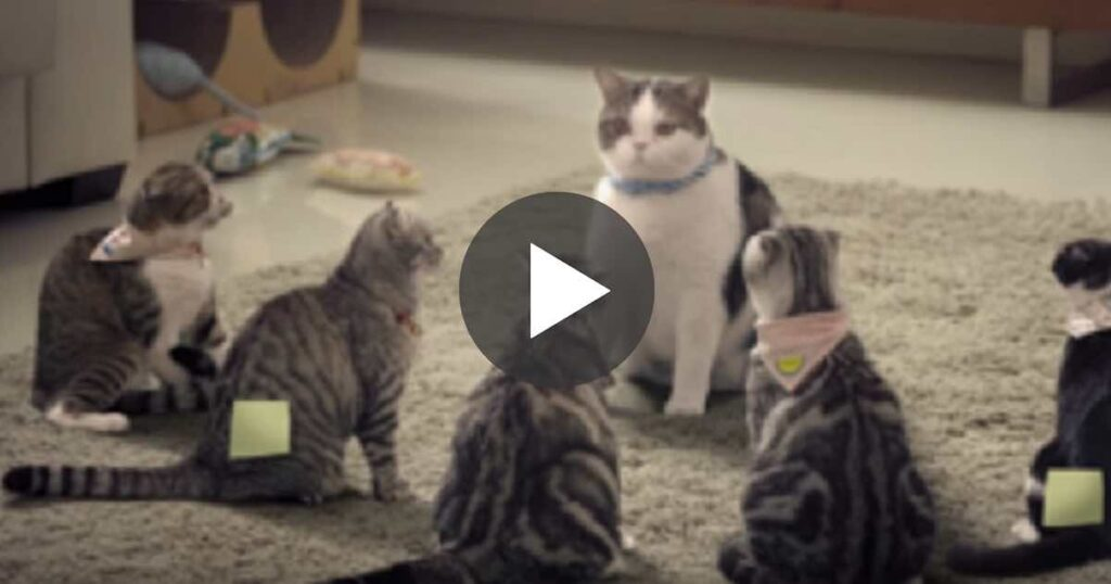 She calls for the cats, but when you see how they respond… You won't stop laughing, hahaha!! 3