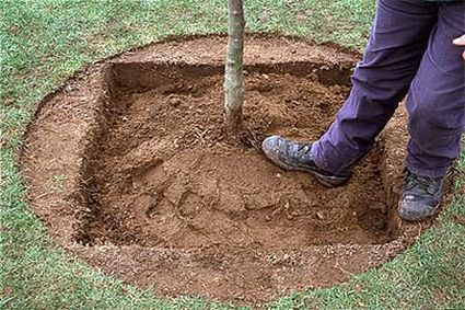 Planting Trees in Square Holes Makes Them Grow Faster and Stronger 3