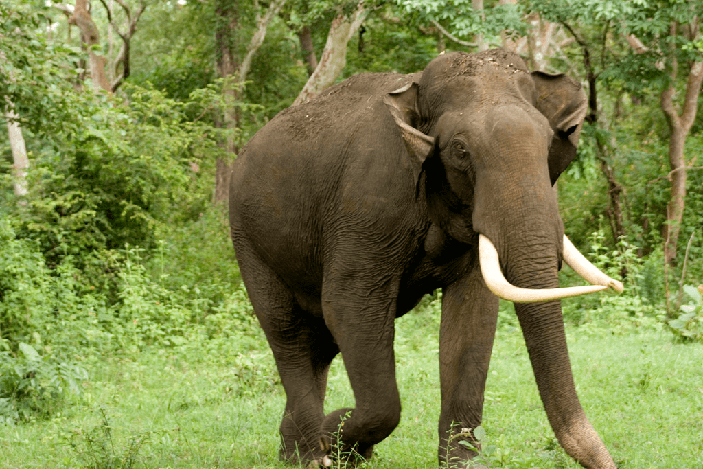 Dandeli Elephant Reserve, Karnataka State gets new elephant reserve