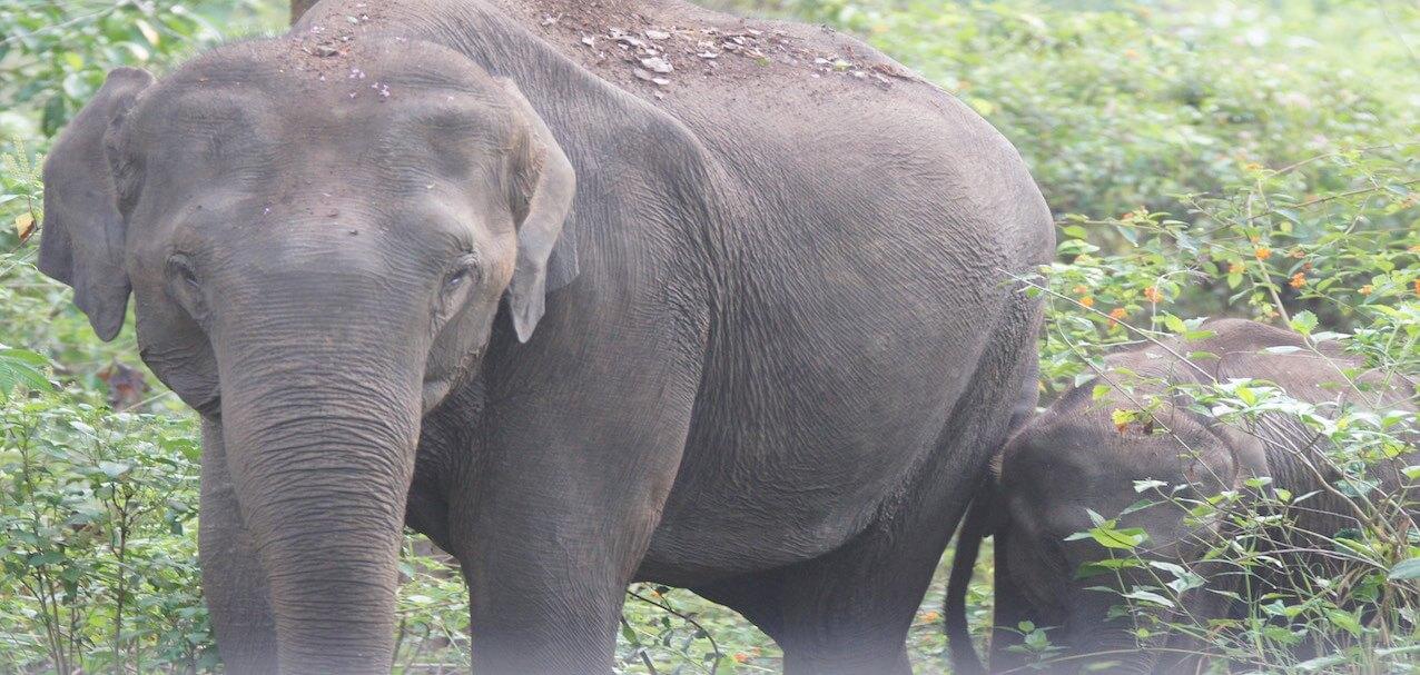 top 10 elephant reserves near bangalore 2