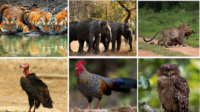 Flora And Fauna Of Bandipur