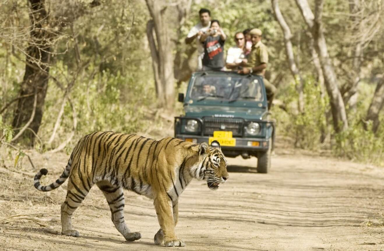Share Safari with fellow Wildlife Enthusiast