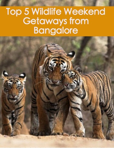 Top 5 Wildlife Weekend getaways from Bangalore!
