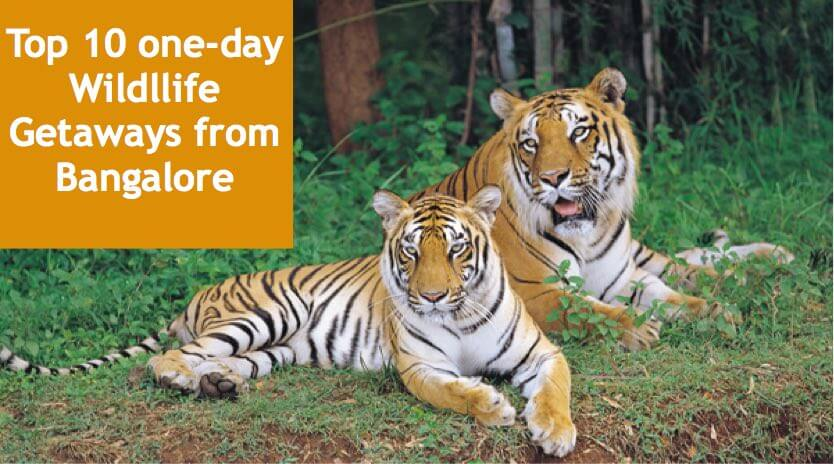 Top 10 one-day wildlife getaways from bangalore