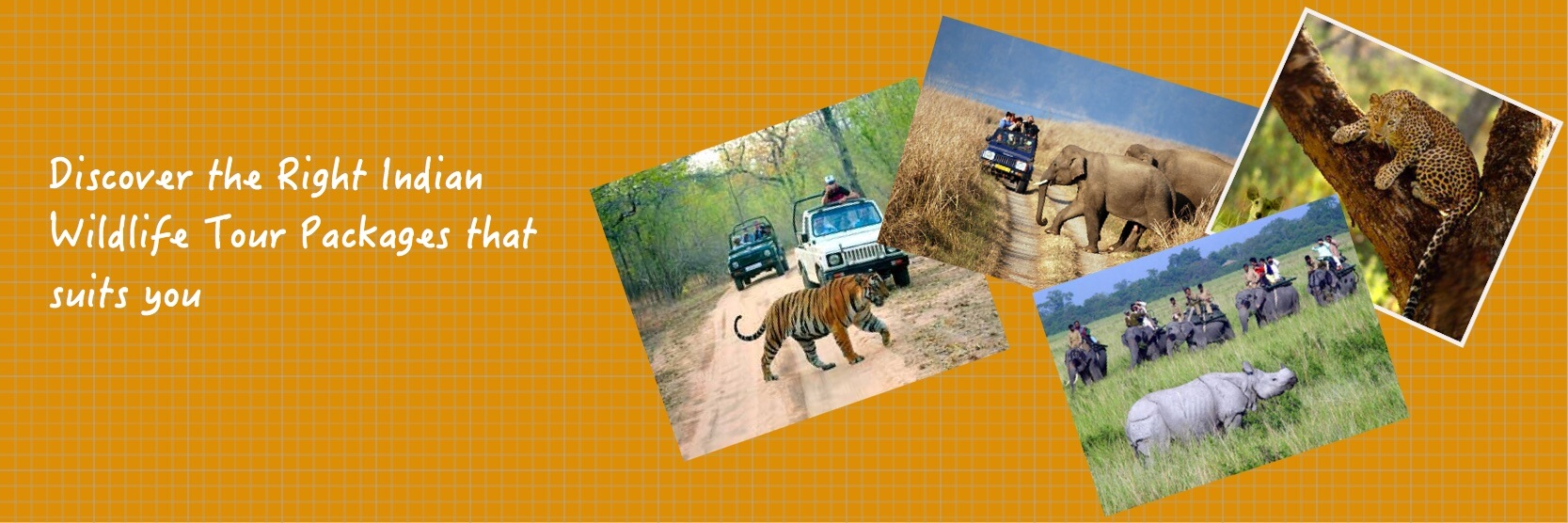 app is the best way to get all the details about Indian wildlife sanctuaries (best travel times, animal sightings, accommodations, prices, etc).