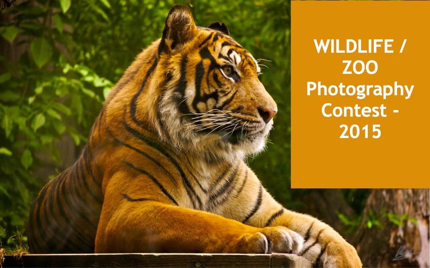 """Wildlife Zoo Photography Contest by Mysore Zoo - WildTrails of India - """"Aggregator App for Your Wildlife Trip"""" (We are an Aggregator App, bringing all of Indian wildlife & Nature resorts into one place to help YOU find your ideal destination/resort based on your personal preferences!! Will aggregate Wildlife/Nature Resorts, National parks, (bird & animal) Sanctuaries, Tiger & Elephant reserves, Organized photographic oriented wildlife tours, Camera, Lens & related equipment Rentals, Cab/Car Rentals, Photography Workshops, info about Indian Animals & birds, Tourist Guides and lot more. Currently we are covering Bandipur, Nagarhole (Kabini & Coorg), Coorg & Bird Sanctuaries close to Bangalore.) PS1: The app will be released soon and will be a paid app. Please register for our Beta program to qualify for a free app. PS2: Please be a responsible wildlife tourist; No littering, No sounds, No feeding, no getting down from the safari jeep, No calls, Phones to Silent mode or Airplane mode or Switch off. Remember we are visiting their home and when we are there, let's follow their rules."""