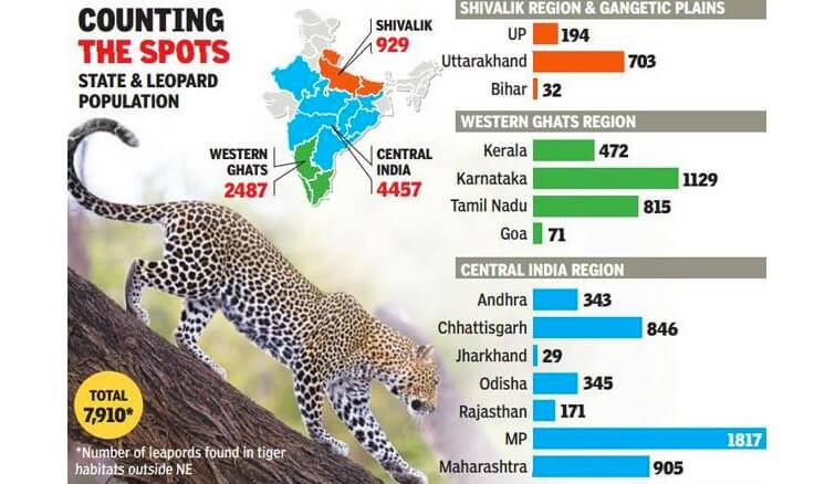 leopard census in india