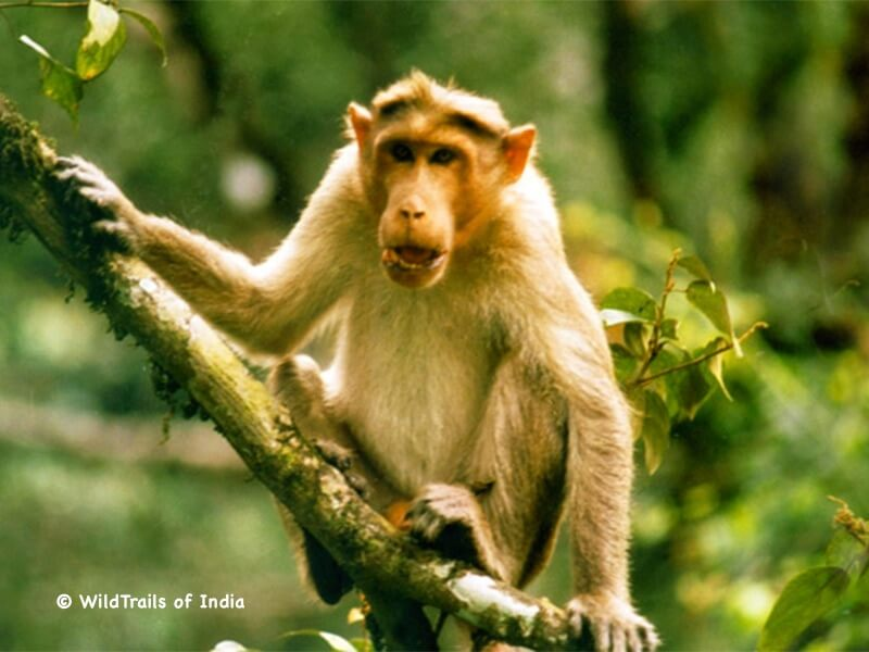 "Aralam Wildlife Sanctuary. WildTrails of India - ""One Stop Destination for all Indian Wildlife Enthusiasts"""